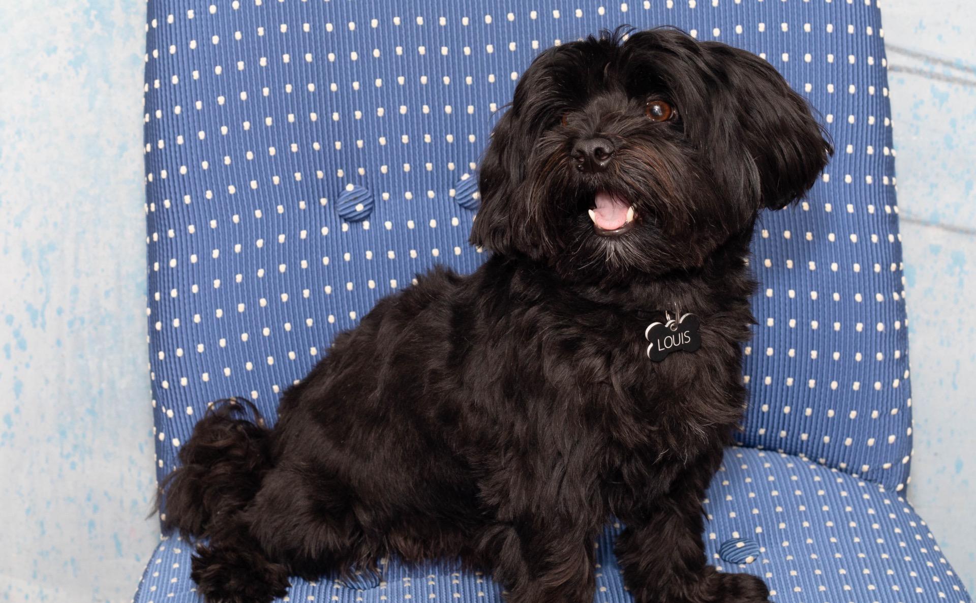 Bild Hund Louis Portrait